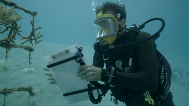 a diver takes notes at one of the coral nurseries on the coral reefs of the society islands in french polynesia on may 9 2019 in moorea french... - reef stock videos & royalty-free footage