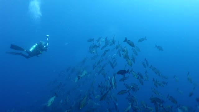 diver takes photos with two-spot red snappers - snapper fish stock videos & royalty-free footage