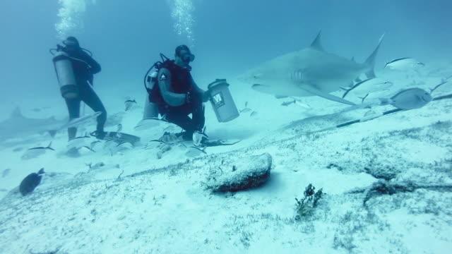 WS Diver touching bull shark (Carcharhinus leucas)