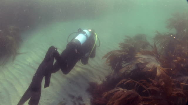 stockvideo's en b-roll-footage met diver underwater at st bride's bay in pembrokeshire wales uk europe - pembrokeshire