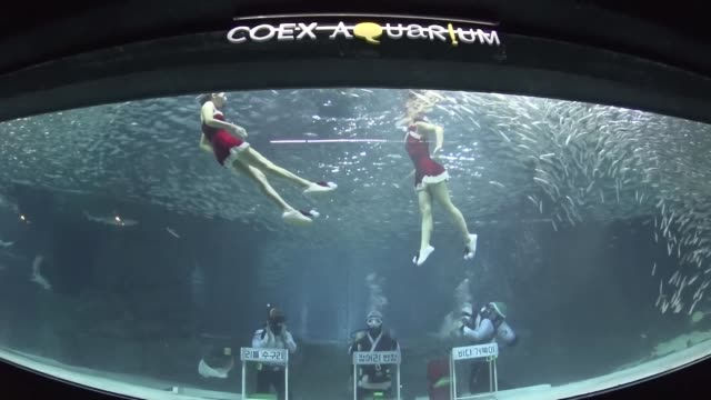diver wearing a santa claus outfit swims with fish in a aquarium during a christmas event at the coex aquarium in seoul, south korea. the aquarium... - aquarium stock videos & royalty-free footage
