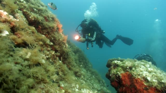 Diver with a light is following a fish