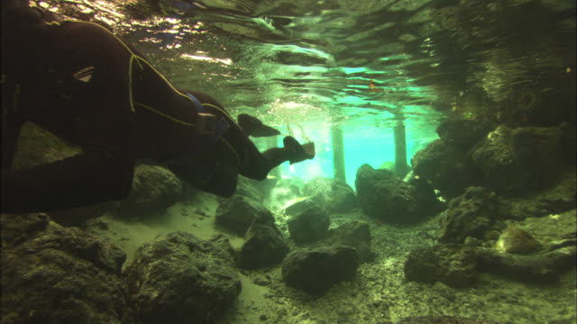 Diver with camera filming, swimming into spring area, Crystal River, Florida, USA