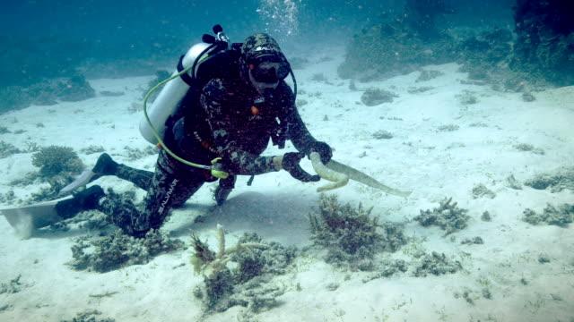 vidéos et rushes de diver with sea snake - plongée sous marine autonome
