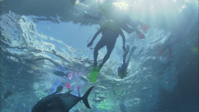 WS LA Divers and fishes swimming at Great Barrier Reef , Queensland, Australia