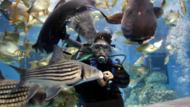 divers feeding freshwater fish - visit stock videos & royalty-free footage