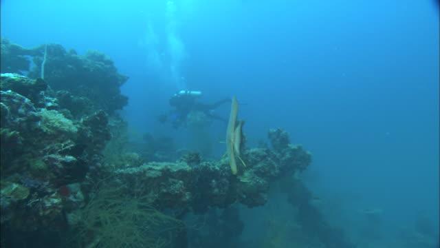 stockvideo's en b-roll-footage met divers film the remains of a world war ii shipwreck in palau reef. - scheepswrak