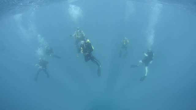 divers from mdsu 2 diving with their counterparts from the belizean counterparts in belize as part of southern partnership station 2014 - aqualung diving equipment video stock e b–roll