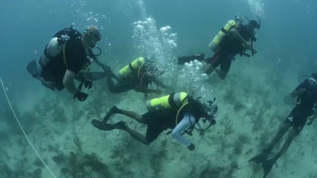 Divers from MDSU 2 diving with their counterparts from the Belizean counterparts in Belize as part of Southern Partnership Station 2014