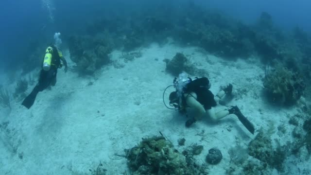 divers from mdsu 2 diving with their counterparts from the belizean counterparts in belize as part of southern partnership station 2014 - deep sea diving stock videos & royalty-free footage