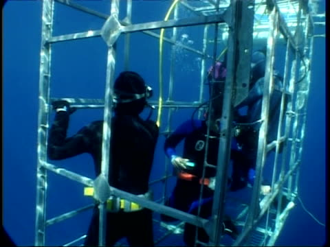 ms divers in shark cage, waving to camera, guadalupe island, pacific ocean - tauchgerät stock-videos und b-roll-filmmaterial