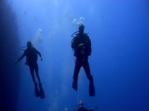 Divers on a steep wall. Red Sea