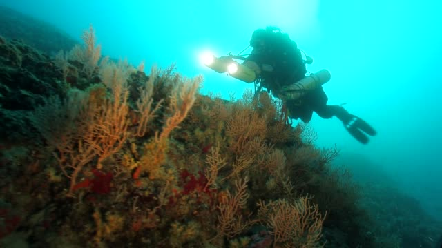 divers on an underwater  wall with colorfull sea fan - gorgonian coral stock videos & royalty-free footage