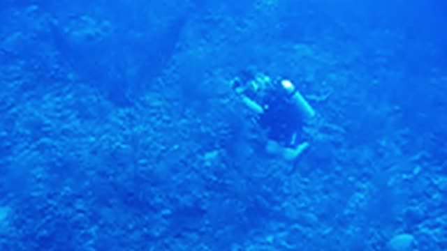 divers swimming above kristy watch her photograph a fish oblivious to the enormous spotted eagle ray approaching her from behind you can hear one of... - deep sea diving stock videos & royalty-free footage
