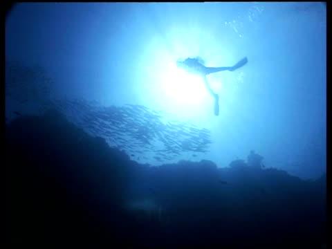 wa divers swimming next to jack fish shoal, low angle, sipadan, borneo, malaysia - scuba diving stock videos & royalty-free footage