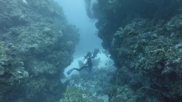 ws divers swimming through coral reef - dykarperspektiv bildbanksvideor och videomaterial från bakom kulisserna