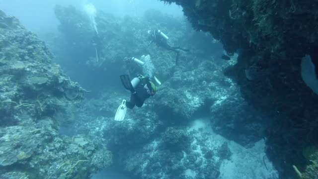 WS Divers swimming through coral reef