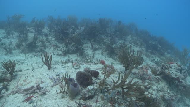 ms pov diverse reef / playa del carmen, isla mujeres, mexico - ゴーゴニアンコーラル点の映像素材/bロール