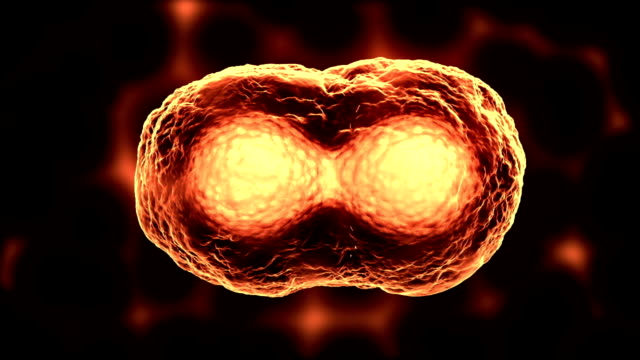 dividing cells or mitosis orange - biological cell stock videos and b-roll footage