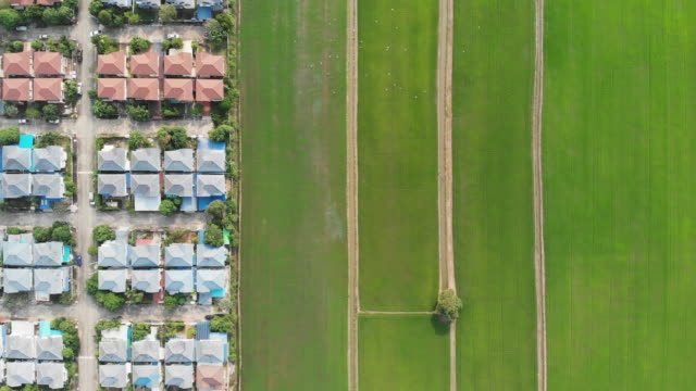 dividing line between the town home and rice field. - rice paddy stock videos and b-roll footage