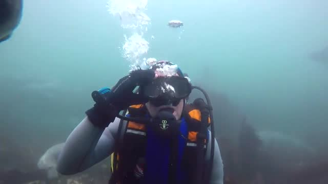 diving enthusiast ben burville had a very close encounter with a curious seal off the northumberland coast a few months ago. in video burville... - peel stock videos & royalty-free footage