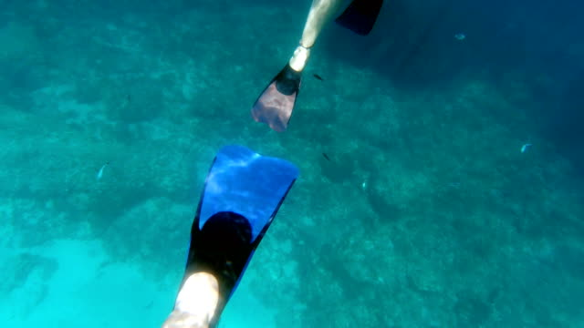 stockvideo's en b-roll-footage met duikflippers in actie - zwemvlies