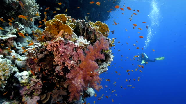 diving in egypt - scuba diving stock videos & royalty-free footage
