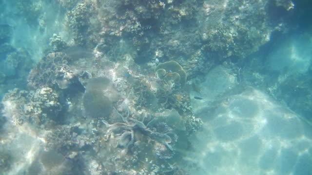 週末の間に浅いサンゴ礁でのダイビング。