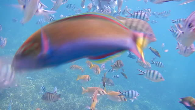 diving in shallow reefs during the weekend. - ko samui stock videos & royalty-free footage