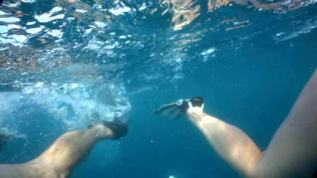 vídeos de stock e filmes b-roll de diving in slow motion. view of legs and flippers. exotic turquoise waters. - aqualung diving equipment