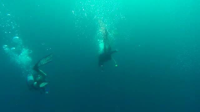 Diving in the Mediterranean 1