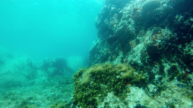 vídeos y material grabado en eventos de stock de buceo en el mar en verano en el mar mediterráneo, grecia - estilo de vida sostenible