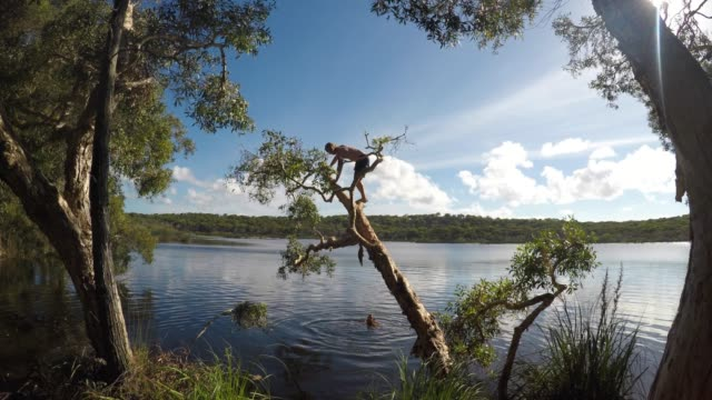 diving in the water at a lake on fraser island - opportunity stock videos & royalty-free footage