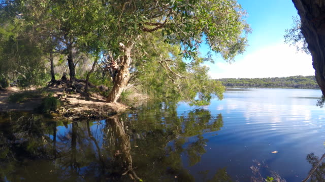 diving in the water at a lake on fraser island - rope swing stock videos & royalty-free footage