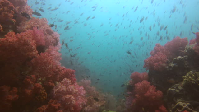 diving into a beautiful coral reef - soft coral stock videos & royalty-free footage