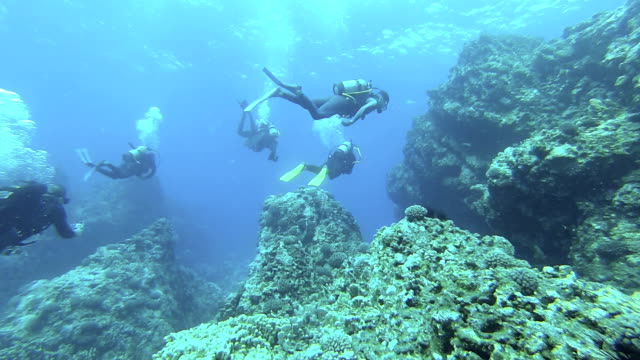 diving team - scuba diving stock videos & royalty-free footage