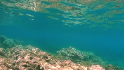 水中ダイビング、ギリシャの島の透き通ったラグーンで熱帯礁を探索 - ウニ点の映像素材/bロール