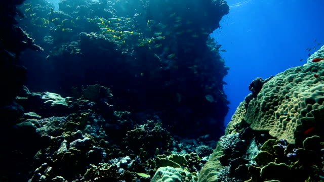 diving - riff stock videos & royalty-free footage