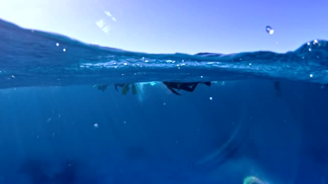 diving with dolphins. underwater scenery - salt water fish stock videos & royalty-free footage
