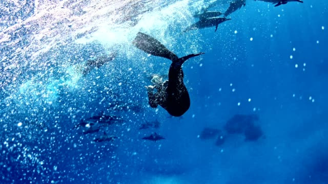 diving with dolphins. underwater scenery - dolphin stock videos & royalty-free footage