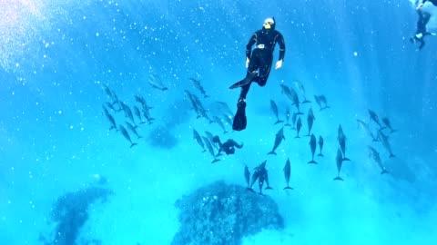 stockvideo's en b-roll-footage met duiken met dolfijnen. onderwater landschap - dolfijn