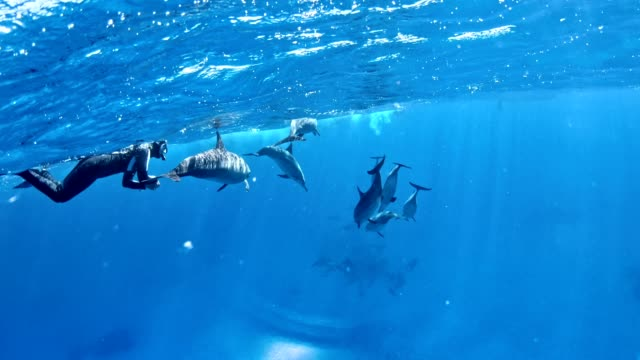 diving with dolphins. underwater scenery - tropical fish stock videos & royalty-free footage