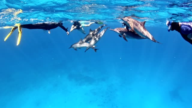 diving with dolphins. underwater scenery - maldives stock videos & royalty-free footage