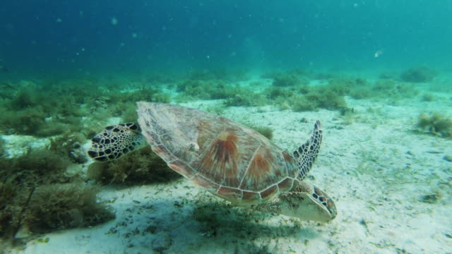 diving with turtles - bay of water stock videos & royalty-free footage