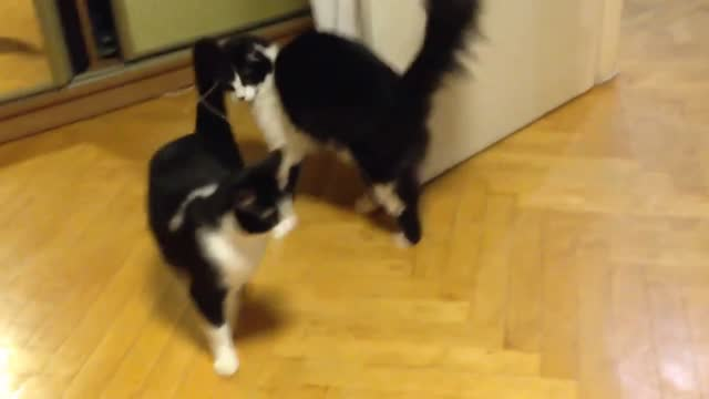 stockvideo's en b-roll-footage met dmytro from ukraine found his cat keaton behaving strangely recently. the poor animal was desperately trying to catch up with a string that had... - um animal