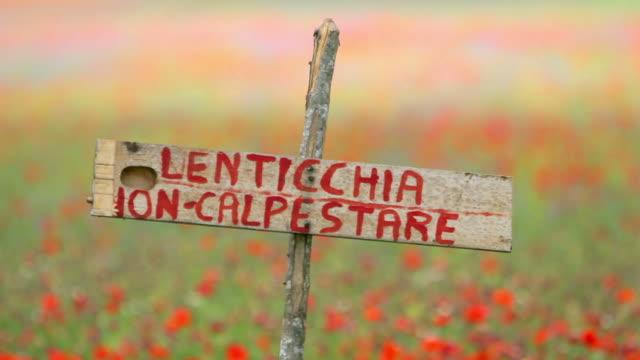 vídeos de stock, filmes e b-roll de não entre no cultivo de lentilha no castelluccio di norcia - umbria
