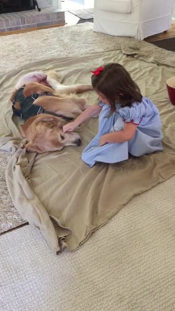 do you think that adorable girls and dogs can get along pretty well? then you should watch this video right now. most children love dogs, but some... - only girls stock videos & royalty-free footage