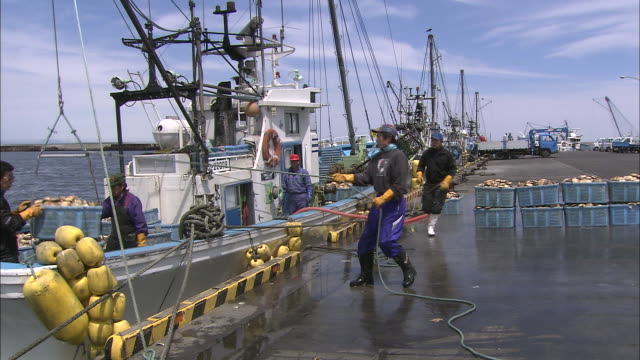 dock workers at a notsuke bay pier unload baskets of scallops from a fishing boat - crustacean stock videos & royalty-free footage