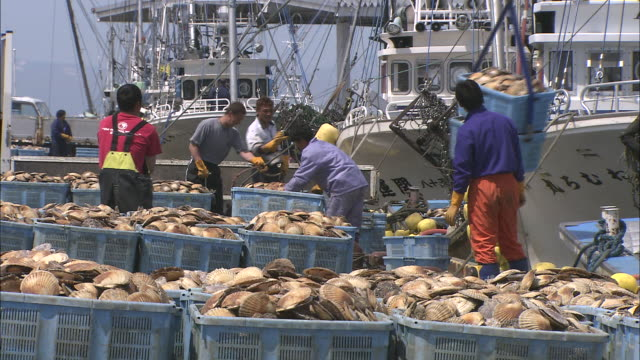 dock workers handle baskets of scallops as fishing boats are unloaded at a port. - ホタテ点の映像素材/bロール