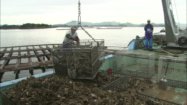 vídeos y material grabado en eventos de stock de dock workers load large bins of oysters into a boat at an oyster fishery in higashihiroshima, japan. - red de pesca